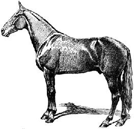 HorseBW_4