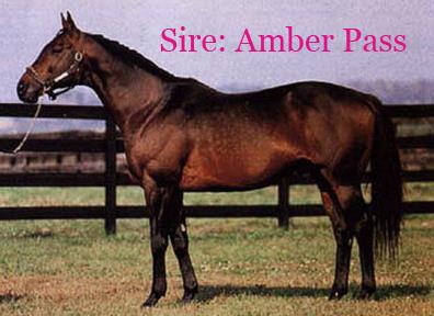 Amber Pass