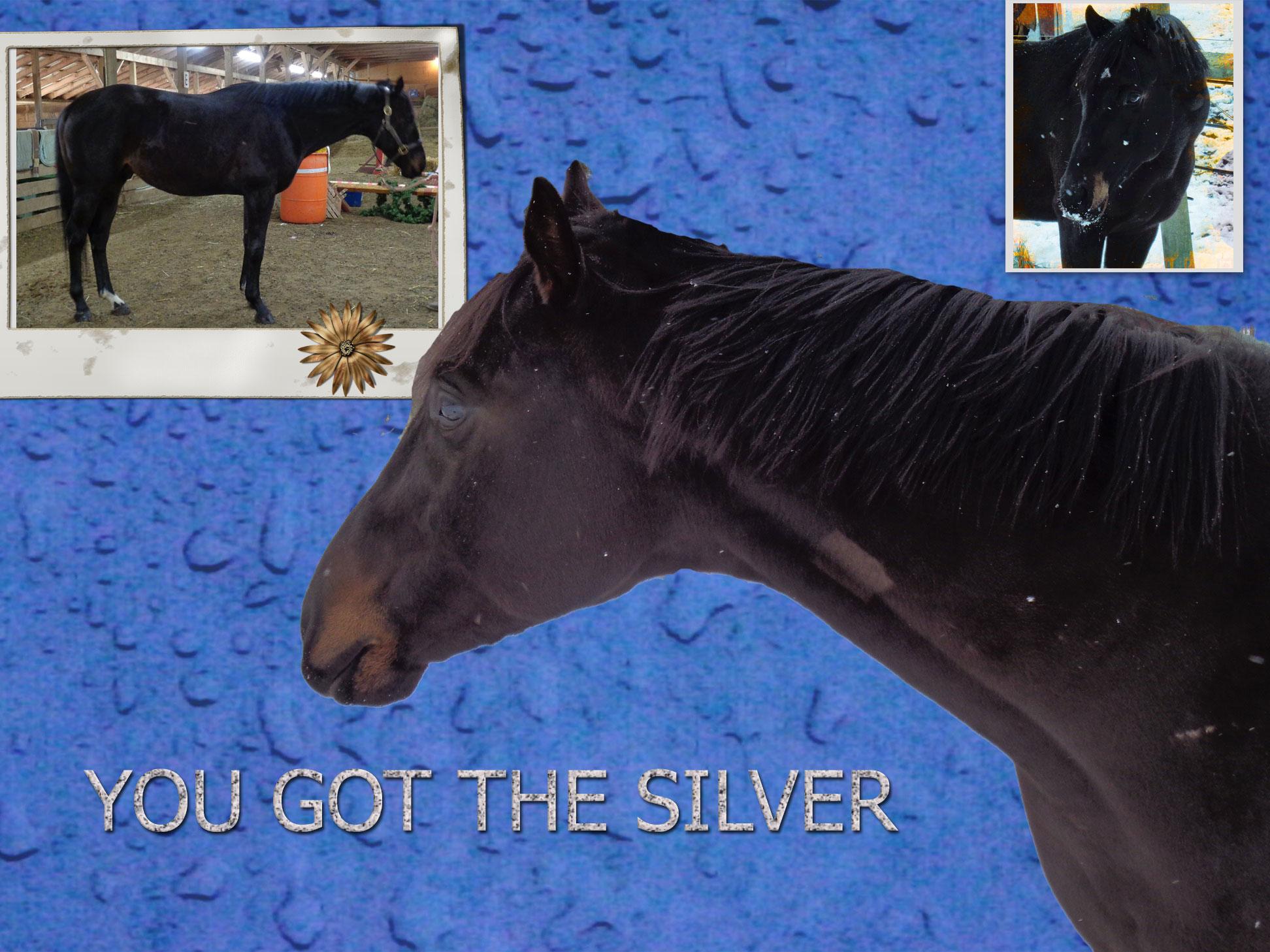 silveradvert